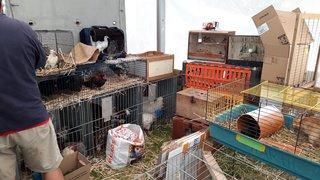 Foire de Chaindon: des conditions inacceptables pour les bêtes?