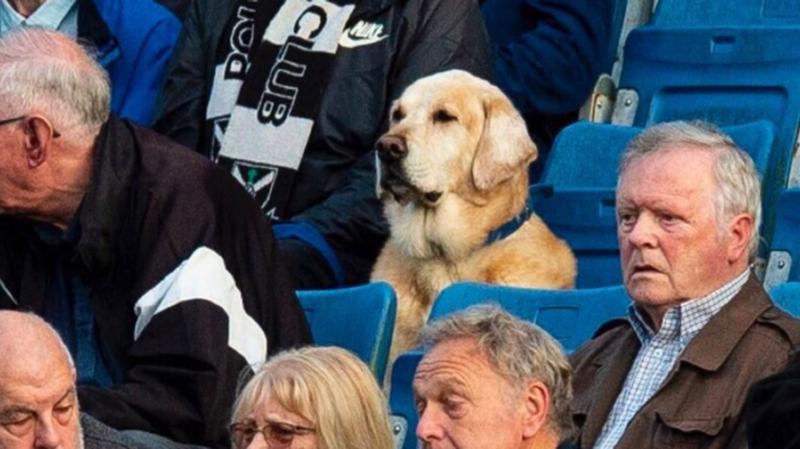 Sage, le regard concentré, Yardley est un spectateur exemplaire.