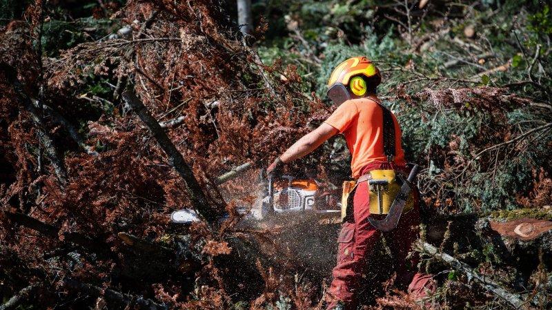 Corcelles: les forestiers face au dépérissement des arbres
