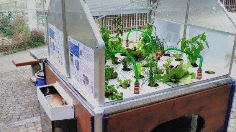 L'aquaponie, ou quand l'élevage de poissons est associé à la culture de plantes.