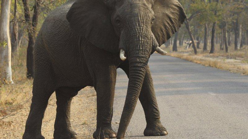 Le Zimbabwe connaît depuis plusieurs saisons des épisodes de sécheresse aggravés par le réchauffement climatique. La faune et la population sont menacées.