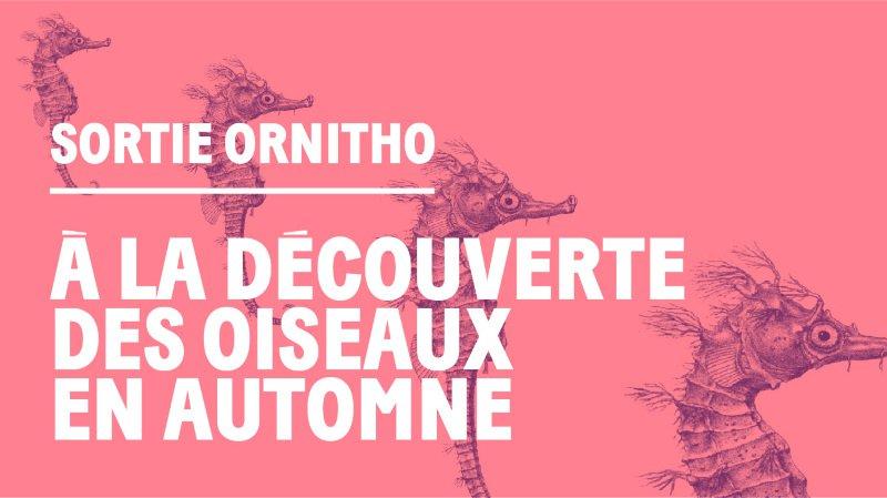 """Sortie Ornitho - """"À la découverte des oiseaux"""""""