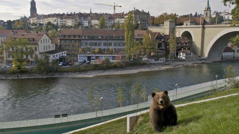 Le parc des ours en ville de Berne.