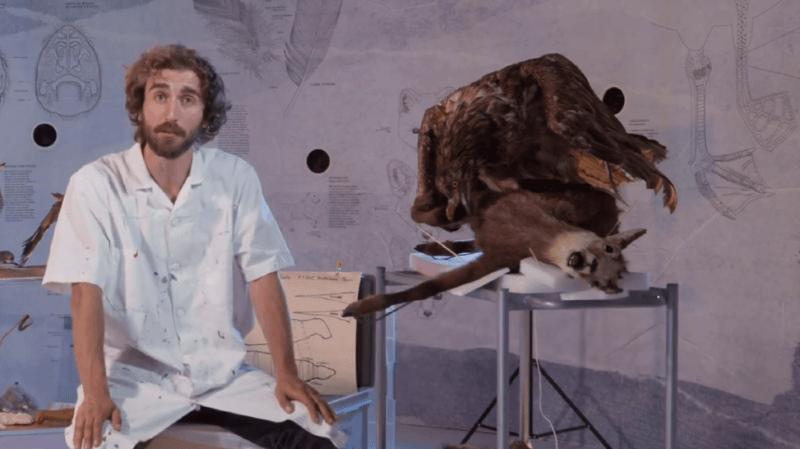 Que fait vraiment un taxidermiste? Le Muséum d'histoire naturelle de Neuchâtel vous explique