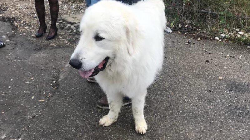 Neuchâtel: le chien «Olaf» a été euthanasié