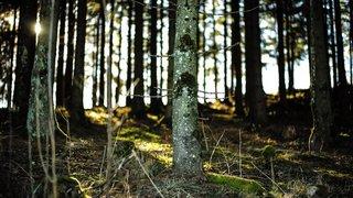 Cernier: une journée pour découvrir les arbres de nos régions et leurs secrets