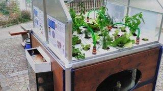 Ecosystème associant plantes et poissons exposé à La Chaux-de-Fonds