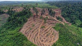 Climat: la Norvège paiera le Gabon pour ne pas déforester
