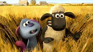 Quand l'ovin fait ami-ami avec l'Ovni