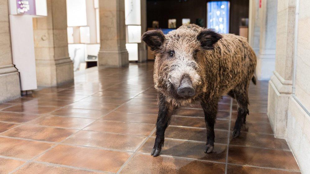Avec l'aide de la Case à chocs, le Muséum propose dans ses murs un Bar bestial.