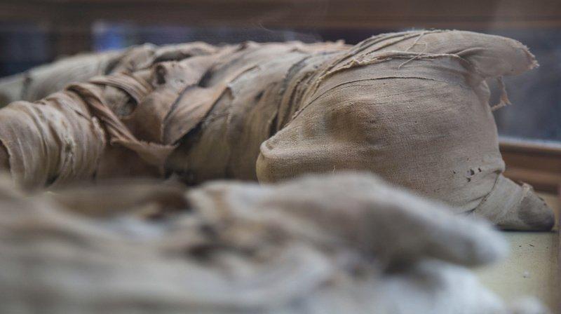 Egypte: découverte de momies d'animaux et de statuettes à Saqqarah