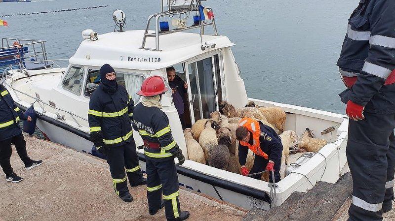 Le naufrage s'est déroulé dimanche soir. Depuis, les secouristes multiplient les opérations pour venir en aide aux animaux.