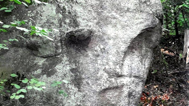 Etrange rencontre dans la forêt de Pierre-à-Bot.