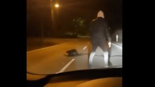 Allemagne: il aide un castor à transporter une branche, la vidéo devient virale