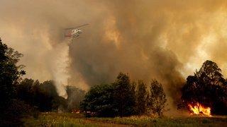 Australie: les feux de forêt se poursuivent, l'état d'urgence a été décrété