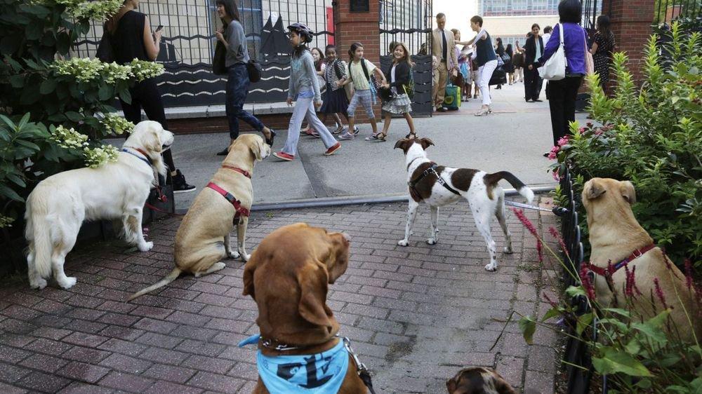 Le retour des cours obligatoires pour les chiens neuchâtelois n'est pas pour tout de suite.
