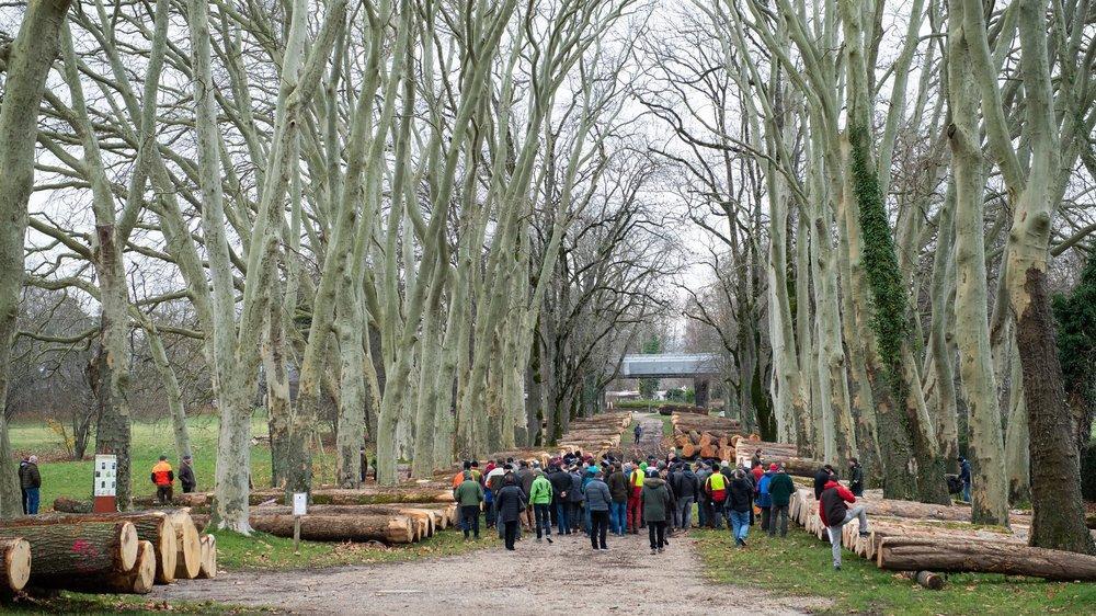 La vente de bois précieux a eu lieu ce mercredi le long de l'avenue des Bourbakis à Colombier.