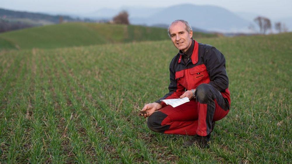 Gilles-Henri Porret dans son champ de blé, à Fresens, avec de la luzerne séchée au glyphosate.
