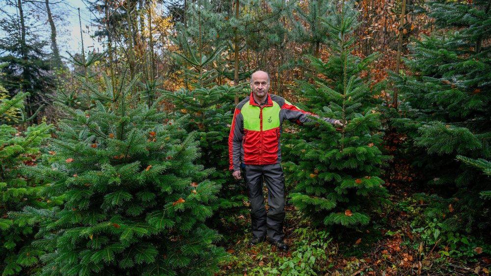 Jean-Pierre Rausis avec les sapins à couper dans la forêt.