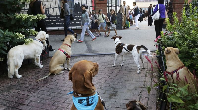 Cours d'éducation pour chiens: obligatoires à Neuchâtel, mais pas tout de suite