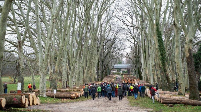 Colombier: la filière des essences précieuses échappe à la morosité du marché du bois