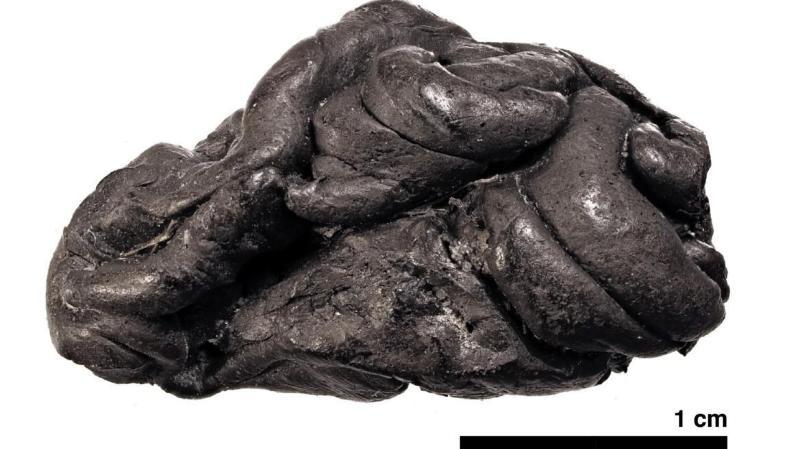 Archéologie: un chewing-gum vieux de 5'700 ans retrouvé au Danemark