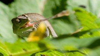 La Chaux-de-Fonds: le vivarium fermé pour cause de travaux