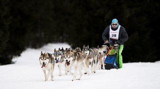 Franches-Montagnes: une grande course par étapes comme en Alaska