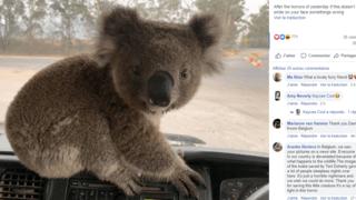 Australie: un chauffeur de camion sauve un petit koala des feux de forêt