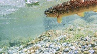 Environnement: les nanoparticules de médicaments risquent de se disperser dans la nature