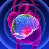 Les mystères du cœur - Anatomie spirituelle