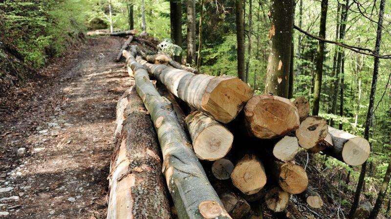 Le recours aux pesticides dans les forêts neuchâteloises est limité et encadré.
