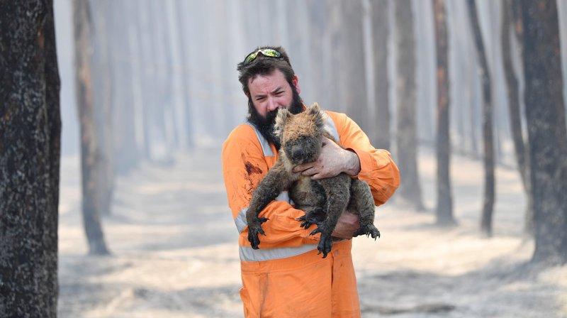 Selon des scientifiques, les incendies auraient déjà provoqué la mort d'un milliard d'animaux en Australie.