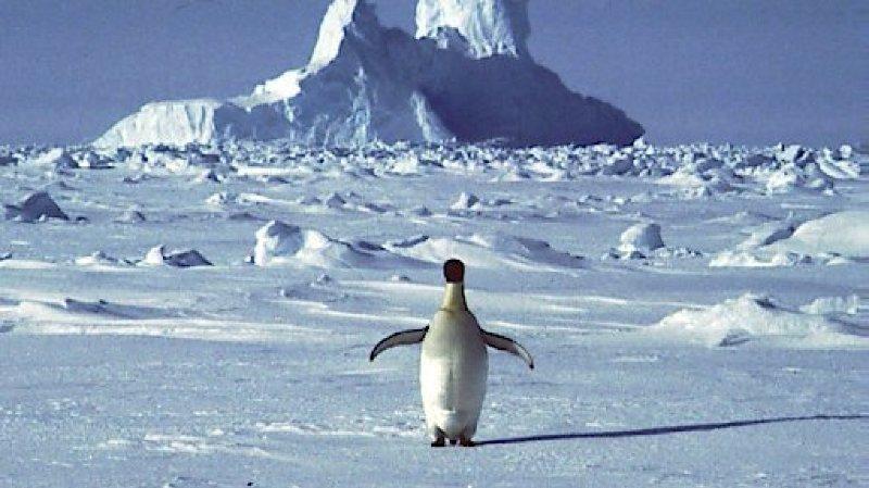 L'Antarctique a enregistré en février un record de température de plus de 20,75° franchissant pour la première fois la barre des 20°C.