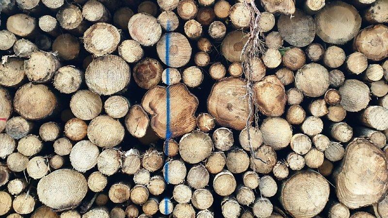 La forêt suisse est à un moment clé: choisir les essences de demain