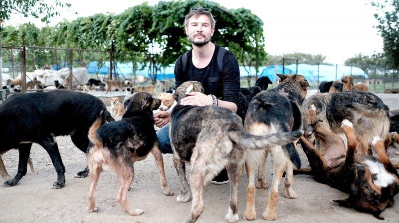 «Cody», le documentaire qui interroge sur le libre arbitre des animaux