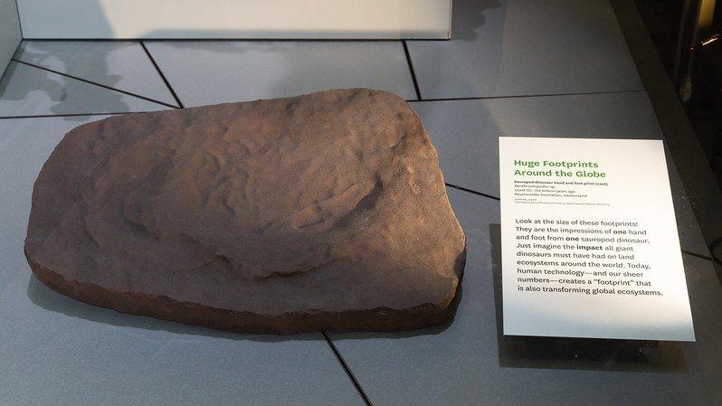 Une empreinte de dinosaure jurassienne exposée à Washington