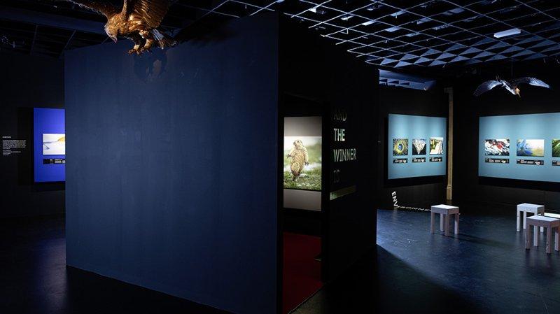 Neuchâtel: les lauréats du concours du Muséum d'histoire naturelle «sur le vif» dévoilés