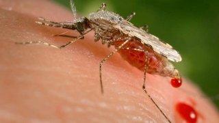 Université de Neuchâtel: un plus dans la lutte contre le paludisme