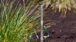 Donner des ailes à la biodiversité neuchâteloise