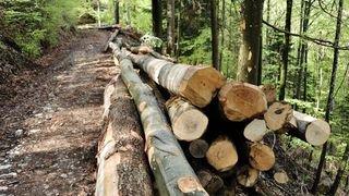 Des pesticides dans les forêts et les eaux neuchâteloises