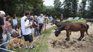 Noiraigue: les animaux du refuge des Oeillons sauvés de la famine grâce aux dons