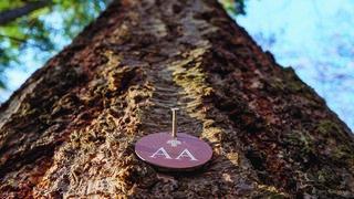 Les arbres cimetières se rapprochent de Neuchâtel