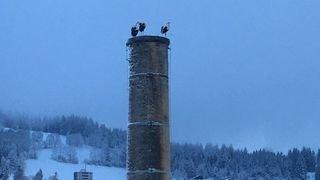 Cigognes de retour en février: est-ce rare?