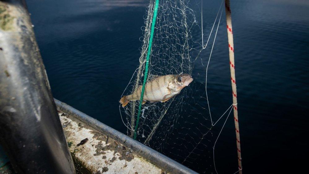 Sur le lac de Neuchâtel, les prises sont de plus en plus faibles pour les pêcheurs.