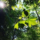 Les Dimanches bien-être - Bain de forêt