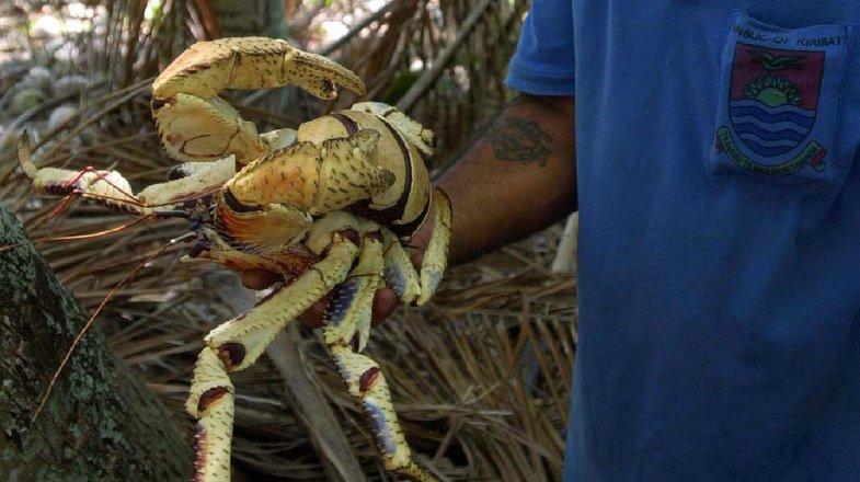 Australie: un crabe géant soupçonné d'avoir volé une caméra à 4000 dollars