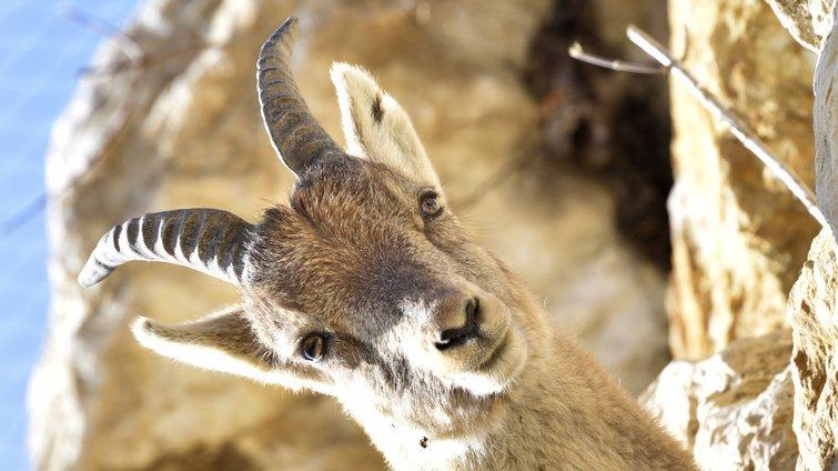 Nature: lebouquetindes Alpes pas forcément tiré d'affaires