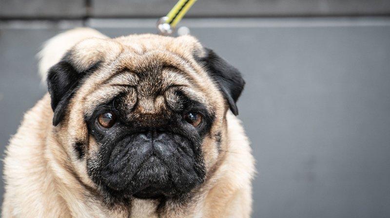 Coronavirus: l'Etat de Neuchâtel s'occupera des animaux des malades