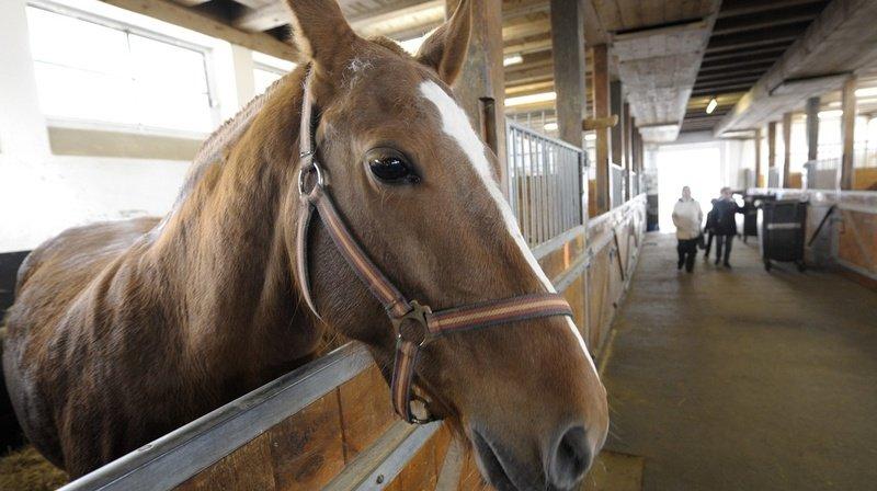 Le Landeron: percuté par deux voitures, un cheval perd la vie
